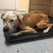 Starved dog found near dump site