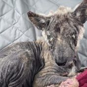 Stray dog used to be invisible and not one person helped her until the world had mercy on her