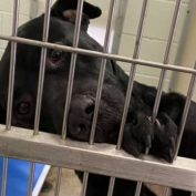 Every day depressed shelter pup with 'black dog syndrome' waits for the family he deserves
