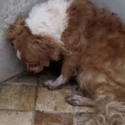 Another victim of hoarders and another dog who doesn't even know what love brings