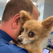 Worried eyes: Owner turned in frightened 'stray' but the little pooch wasn't a stray at all
