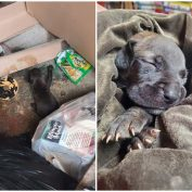 Young puppy found beneath pile of trash at bottom of dumpster