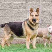 Bonded friends, surrendered because owner moved, unwanted since April