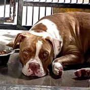 Heartbroken dog at shelter too sad to eat or come out of the kennel