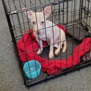 Abused dog abandoned in wire cage at intersection – police searching for responsible party