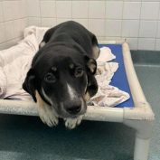 Frightened dog on shelter's euthanasia list spared at very last moment