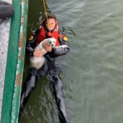 Dog owner rescued by Special Ops cops after jumping into Hudson River to save his dog