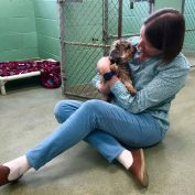Yorkie stolen in Florida seven years ago found in Michigan and reunited with family