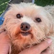 Senior dog at shelter 'terrified and shaking' in her kennel