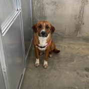 Owner surrendered dog at Texas shelter 'for change in lifestyle'