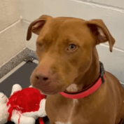 Just Zeus and his teddy bear in Texas shelter after landlord said 'they had to go'