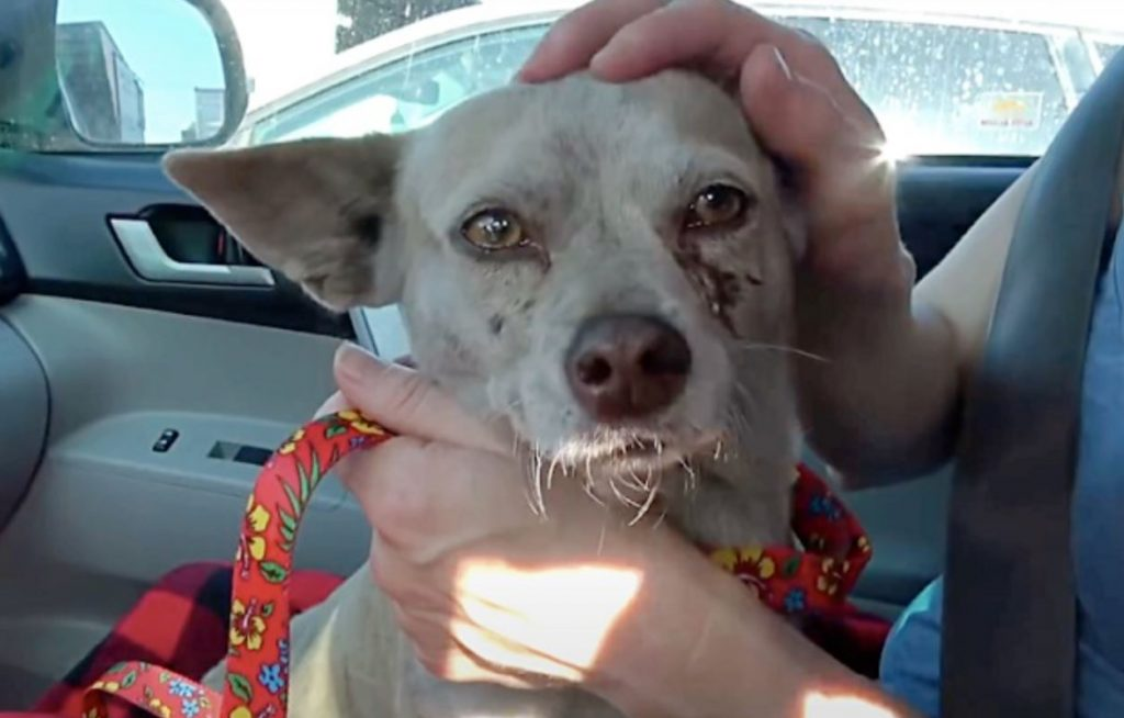 Owner Abandon Dog In Lumber Yard And Toss All Of Her Belongings In Trash Bin