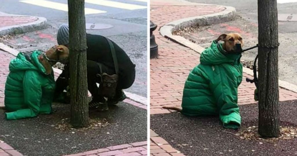 Mom Gives Dog Her Own Coat So He Stays Warm Waiting Outside