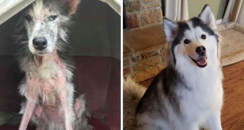 30 Photos Of Dogs Before And After Being Rescued, And It's Too Wholesome