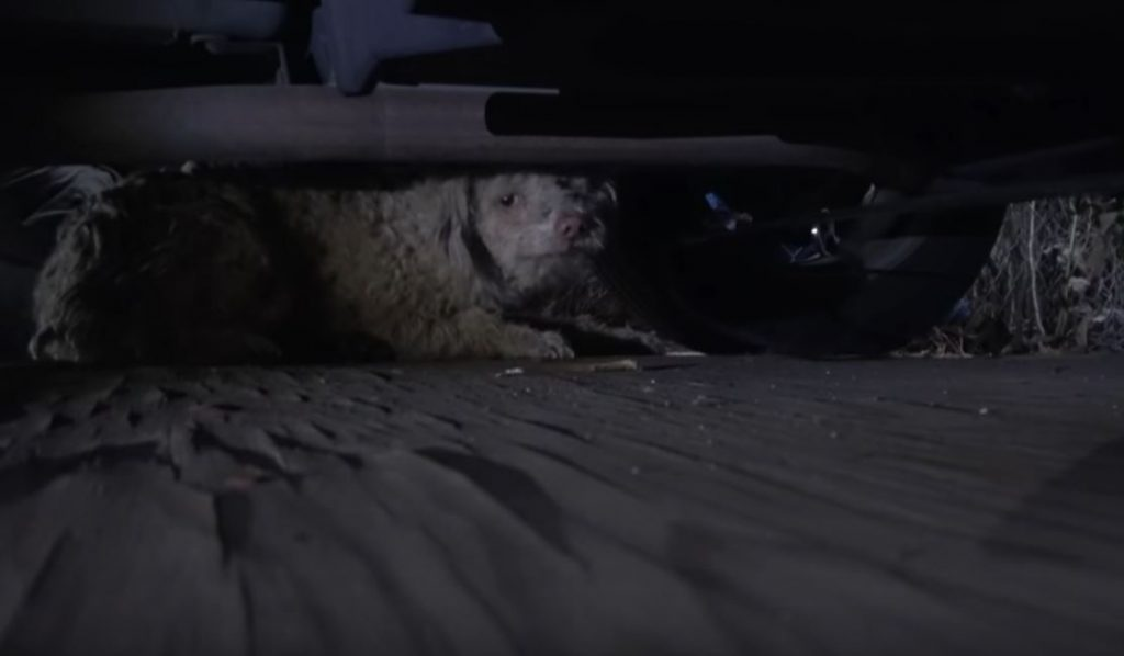 Homeless Dog Got Hit By Car And Was Too Scared To Let Us Help