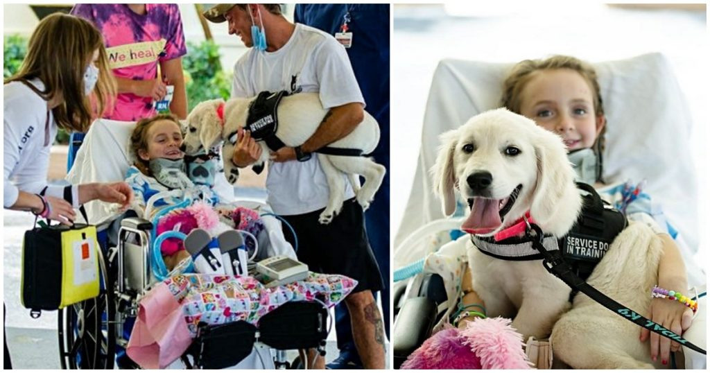 Paralyzed Girl Meets Her New Golden Retriever Service Dog For The First Time