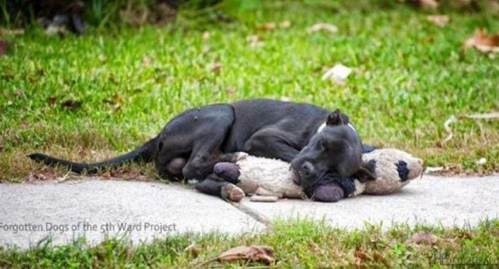 Homeless Dog Went Viral After People Shared A Picture Of It Sleeping With A Stuffed Animal