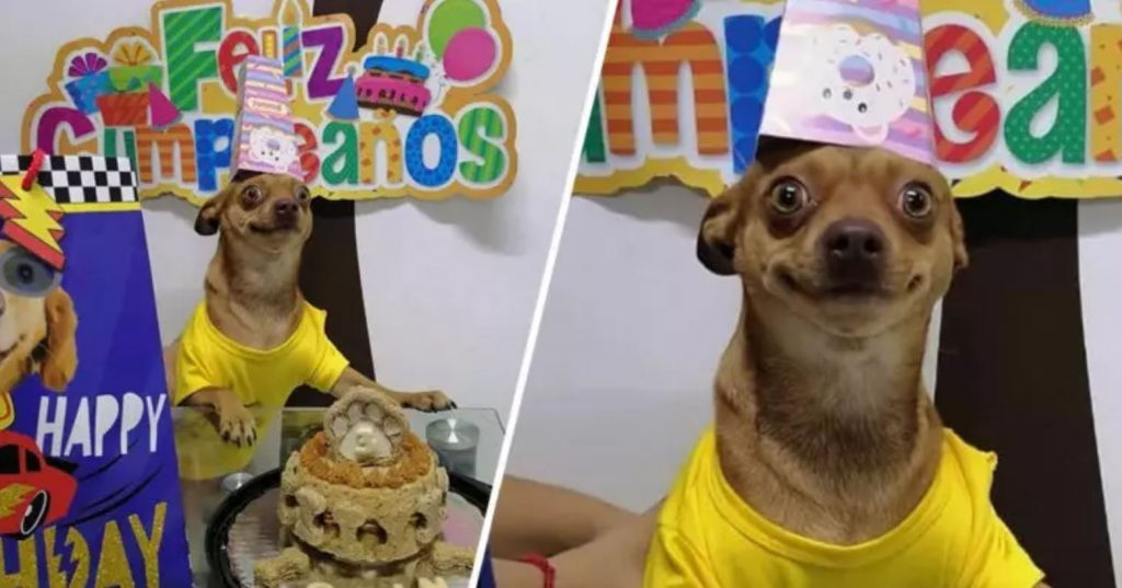 Little Dog Is So Happy That People Remembered His Birthday