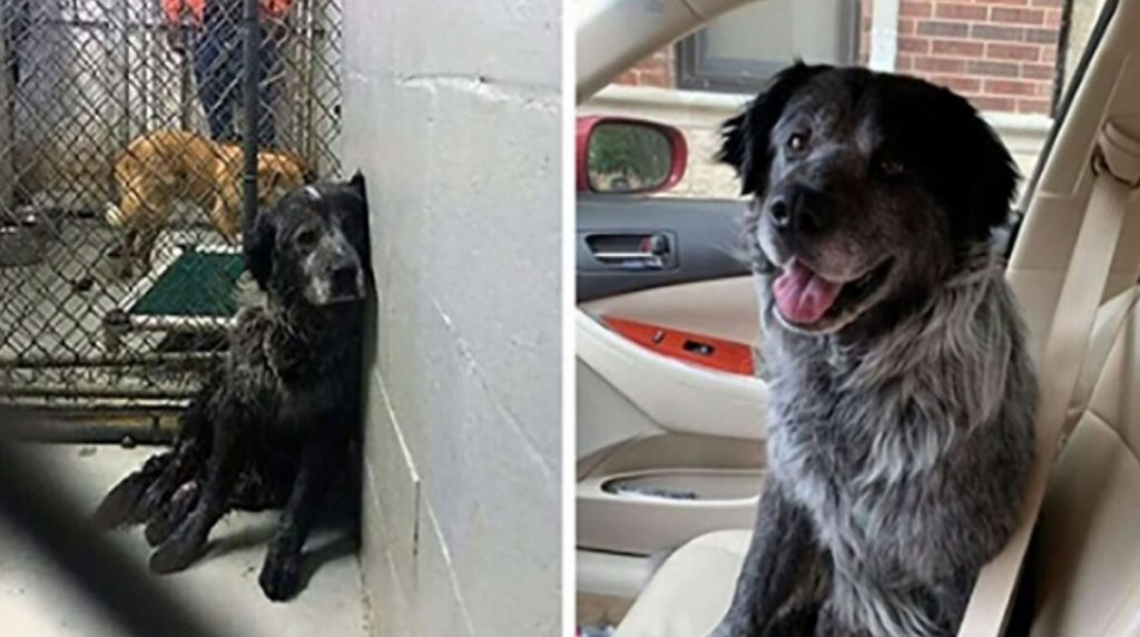 'Broken' dog can't stop smiling when he realizes he's finally safe