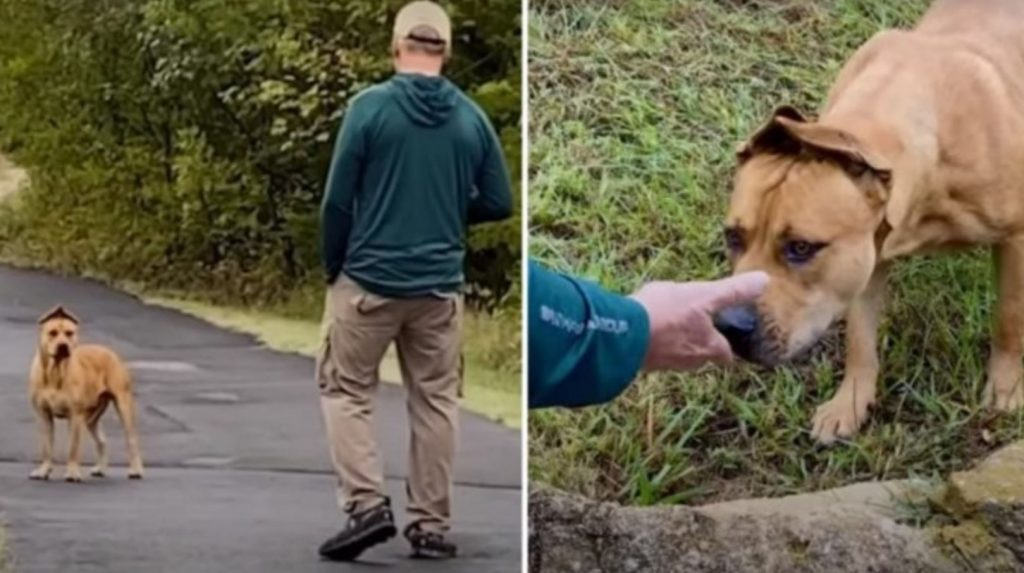 Determined Couple Spends A Year Trying To Earn Terrified Stray Dog's Trust