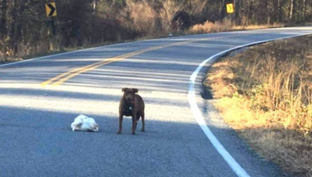 Dog Spotted With Frozen Thanksgiving Turkey Proudly Displays Her Find
