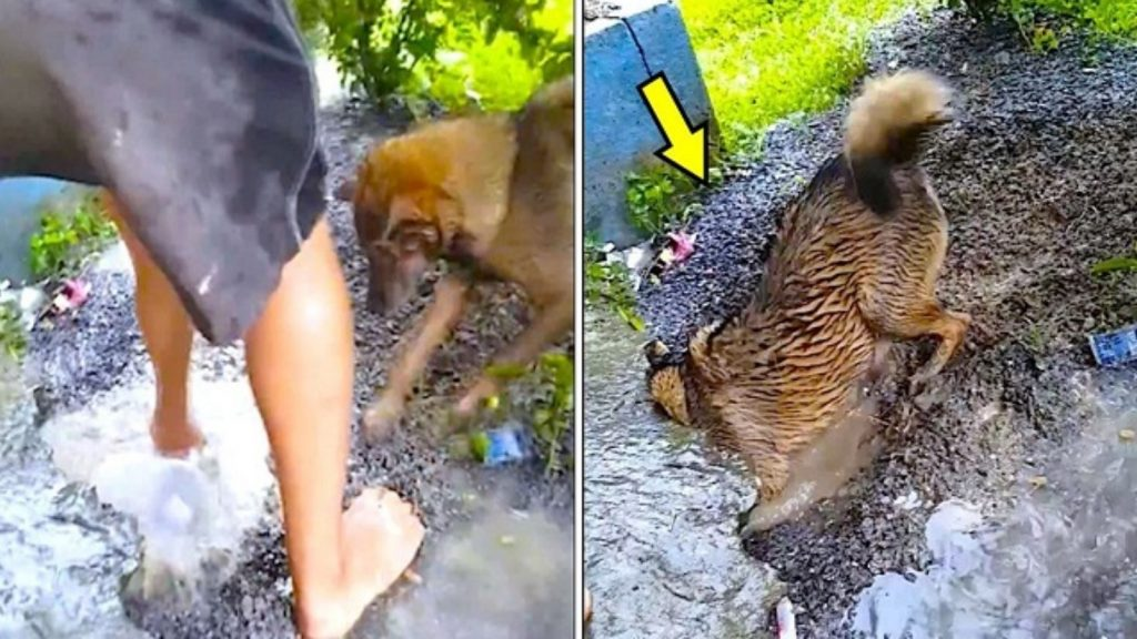 Mama Dog Races The Clock To Saving Drowning Puppies Stuck In Rising Waters