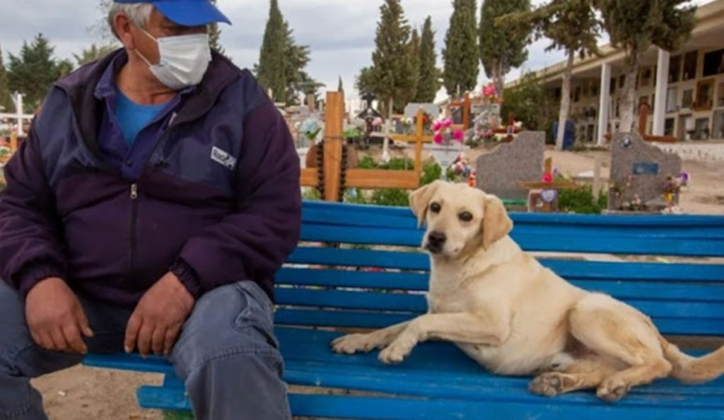 The Dog That Comforts People Who Have Lost Their Loved Ones, As She Too Has Lost Her Owner