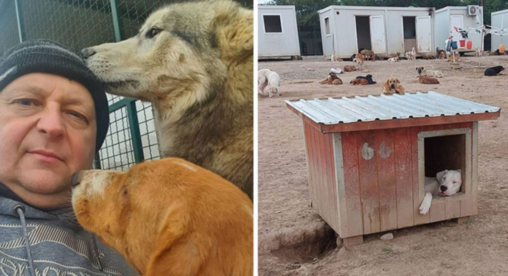 Serbian Man Started A Shelter With His Mother Over 20 Years Ago, Now He's Taking Care Of More Than A Thousand Dogs