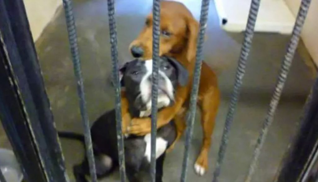 Shelter Dog Hugs Her Best Friend Hours Before Euthanasia And Saves Their Lives