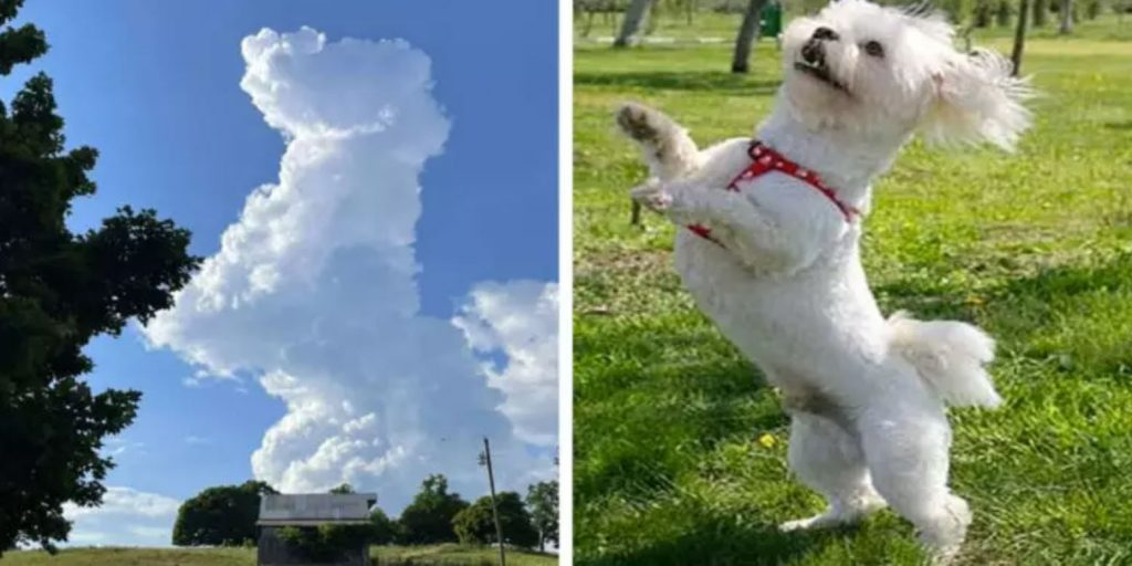 Woman Looking At The Sky Is Shocked To See An Adorable Cloud Dog
