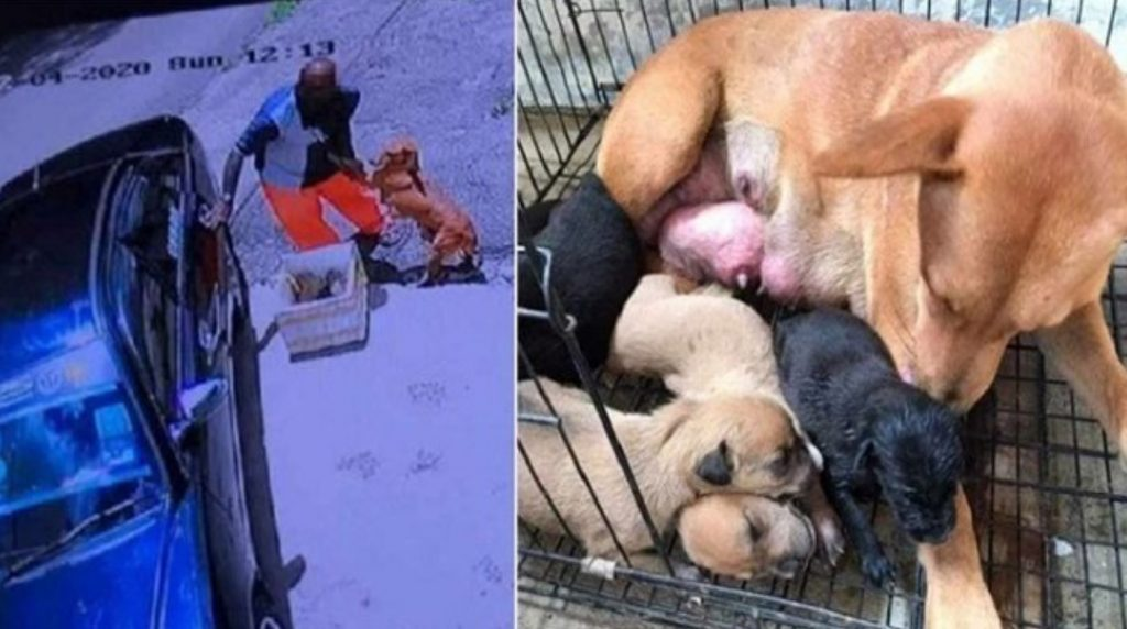 Sick mother dog pleads man to not abandon her and her newborn puppies in a heartbreaking footage