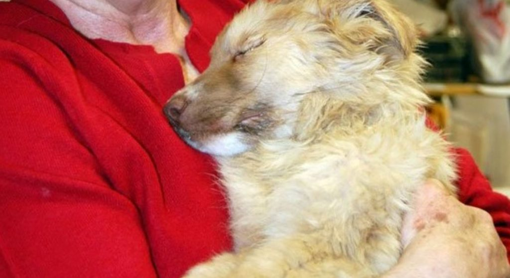 Abandoned Puppy Found In Coma Makes Miraculous Recovery Thanks To Loving Support