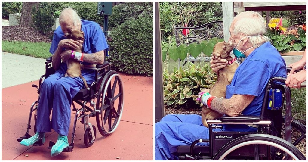 Navy Vet Reunites With Chihuahua Who Saved His Life After Having A Stroke