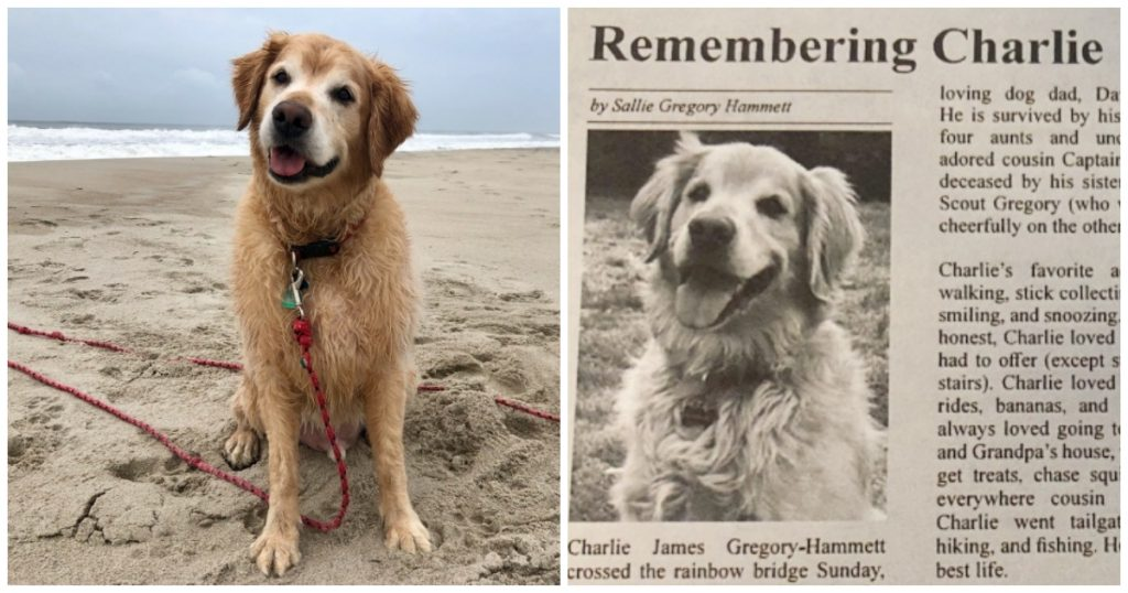 Woman Channels Grief Of Losing Her Golden Retriever Into Touching Obituary