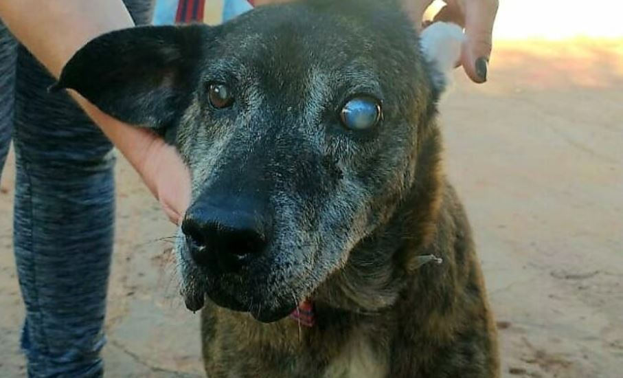 This Dog That Spent 10 Years In A Shelter Due To His Missing Leg, Old Age And Blindness Finally Finds His Forever Home