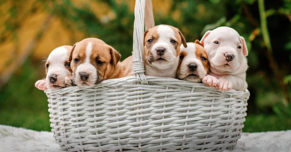 Dog and Her Puppies Left Abandoned in Public Restroom Find Their Forever Homes