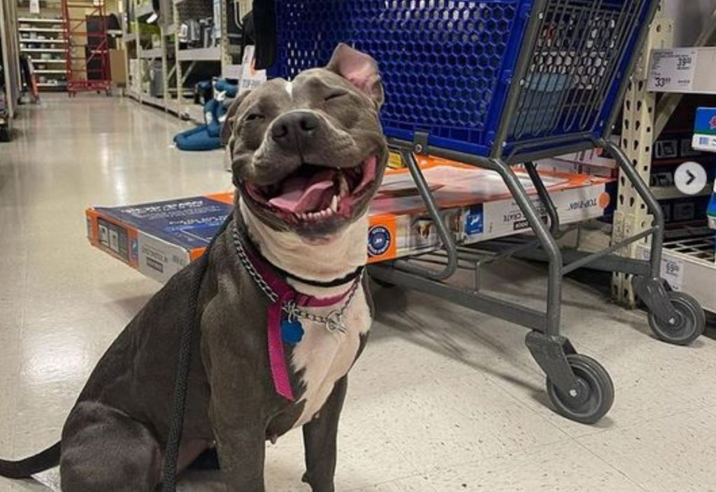 Woman Rescues Abandoned Pit Bull From Railroad Tracks Just In Time