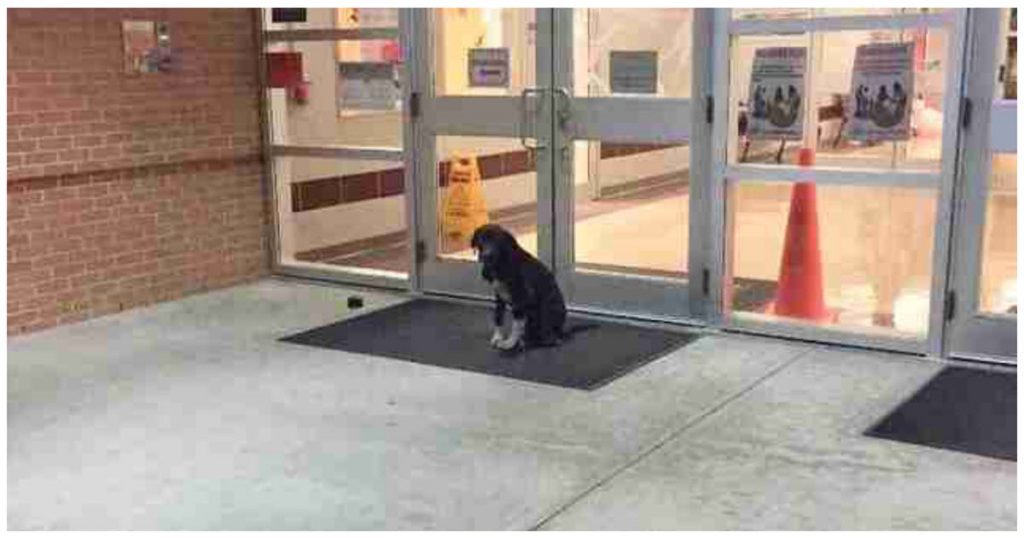 Stray Dog Appeared At School Every Morning So The Teacher Got Involved